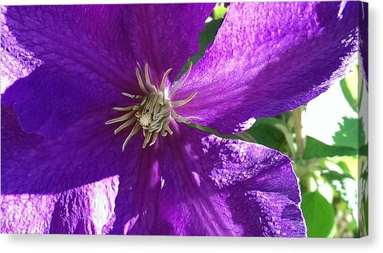 Purple Passion Canvas Print by Bill Mohler