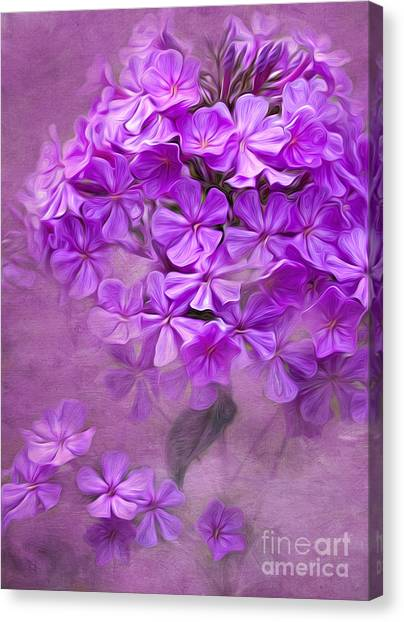 Phlox Canvas Print - Purple Phlox by Lena Auxier