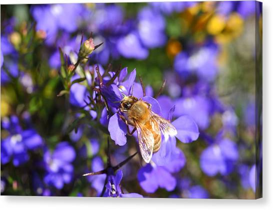 Purple Pollination  Canvas Print