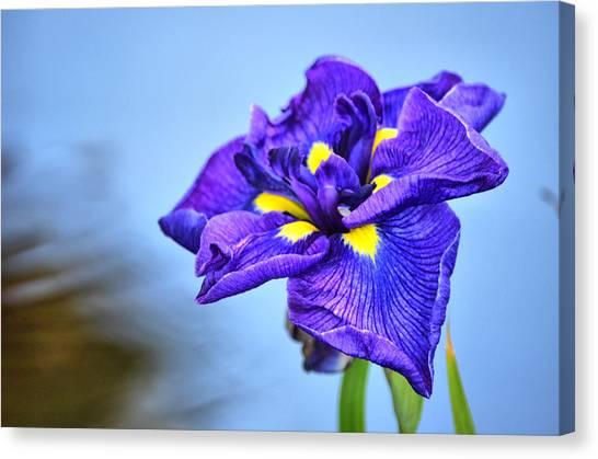 Purple Pond Iris Canvas Print