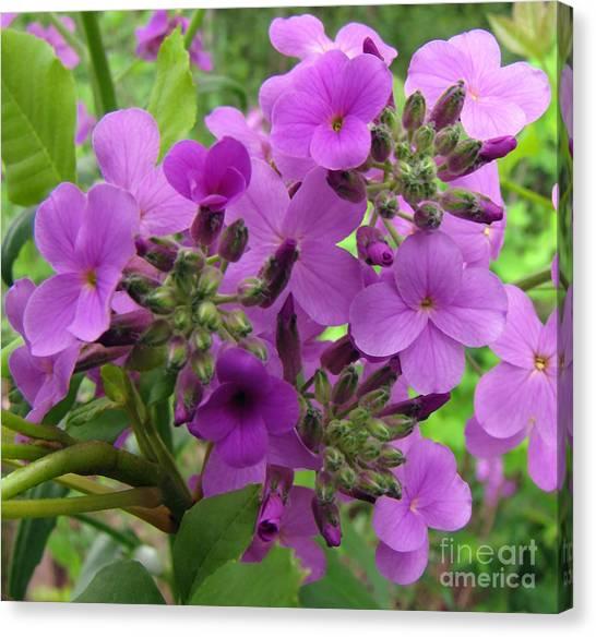 Purple Popping 1 Canvas Print by Cedric Hampton