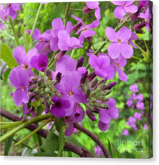 Purple Popping 2 Canvas Print by Cedric Hampton