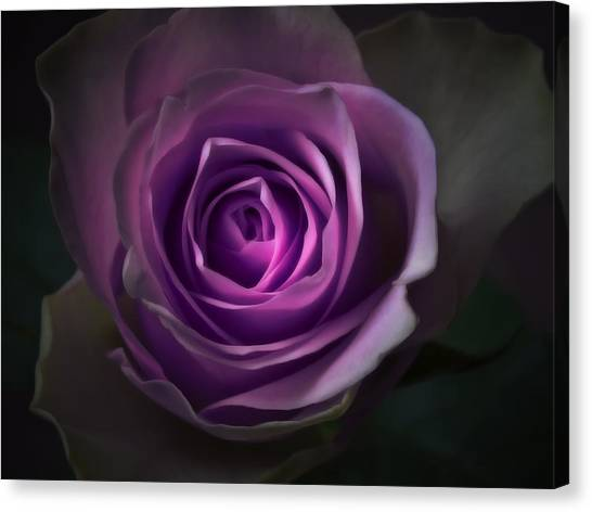 Purple Rose Flower - Macro Flower Photograph Canvas Print by Artecco Fine Art Photography