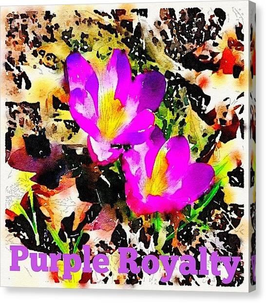 Purple Canvas Print - Purple. Royalty. Crocus. Spring by Teresa Mucha