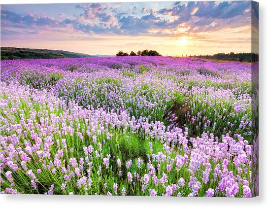 Purple Sea Canvas Print