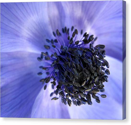 Purple Seed Haze Canvas Print