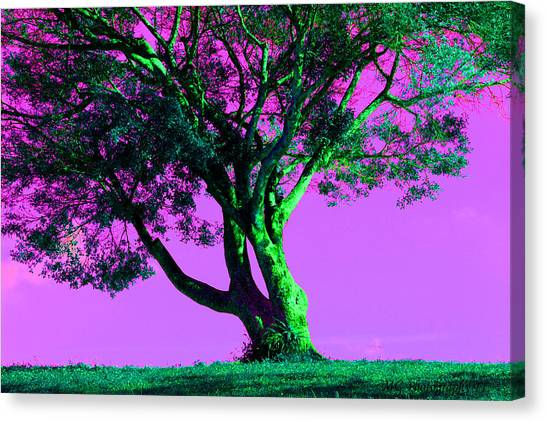 Purple Sky Tree Canvas Print