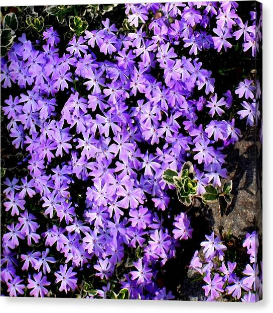 'purple Springtime' Canvas Print