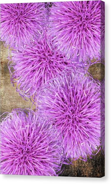 Purple Thistle - 2 Canvas Print