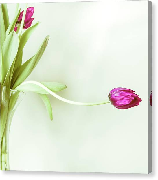 Vase Of Flowers Canvas Print - Purple Tulip Flower by Andy Teo Aka Photocillin