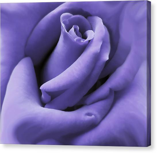 Purple Velvet Rose Flower Canvas Print