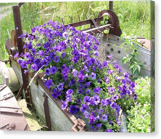 Purple Wave Petunias In Rusty Horse Drawn Spreader Canvas Print