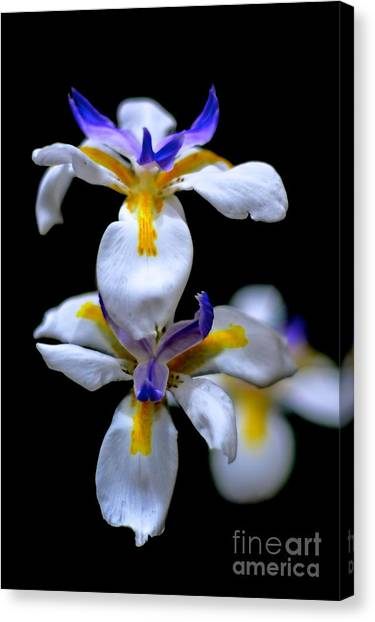 Purple Yellow And White Canvas Print by Bobby Mandal