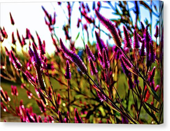 Purpleness Canvas Print