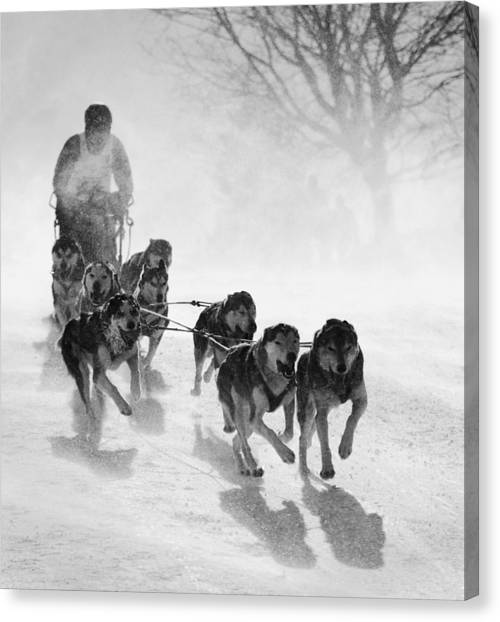 Dog Running Canvas Print - Pursuit by Peter Svoboda, Mqep