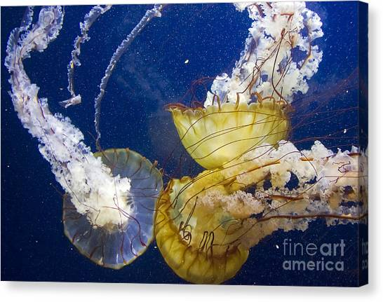 Canvas Print featuring the photograph Putting Our Heads Together by Kate Brown