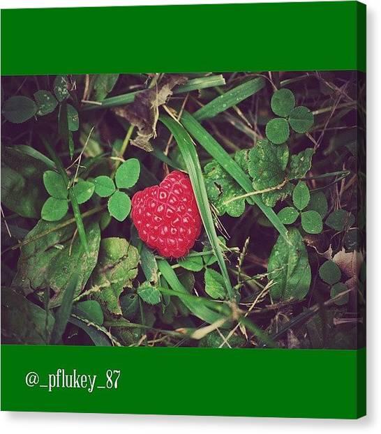 Raspberries Canvas Print - Putting The Spotlight On A by Mason Pfluke