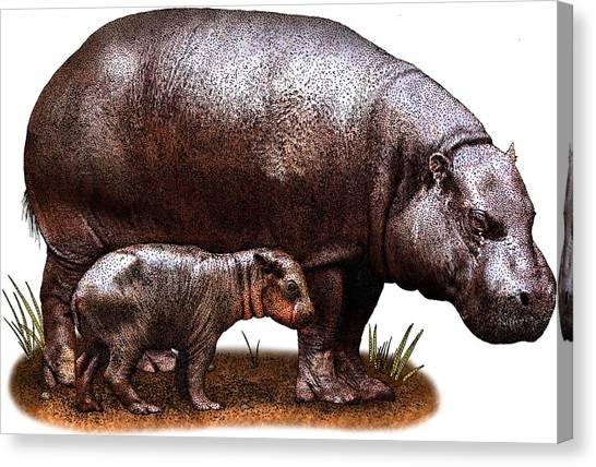 Pigmy Canvas Print - Pygmy Hippopotamus by Roger Hall