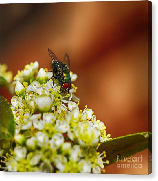 Pyracantha And Fly Canvas Print