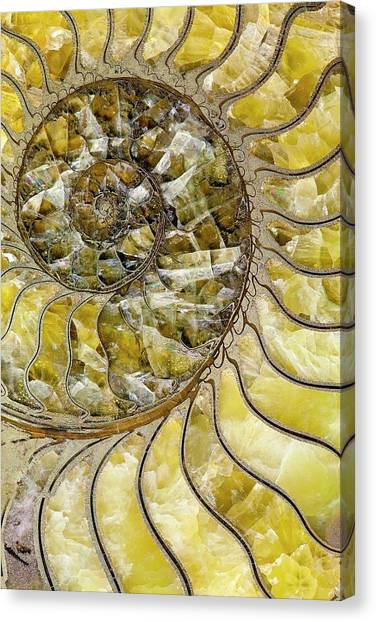 Fibonacci Canvas Print - Pyrites Ammonite Spiral Calcite Crystals by Paul D Stewart