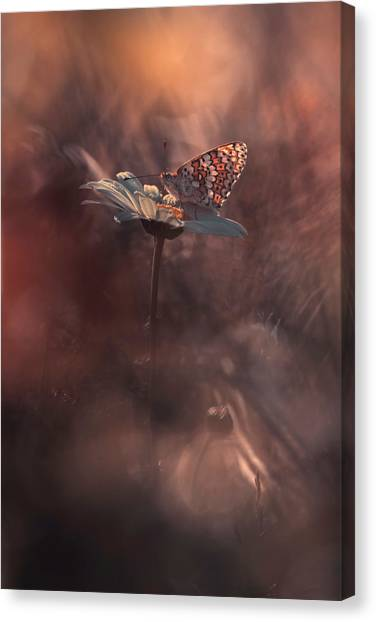 Bug Canvas Print - Pyrotechnics by Fabien Bravin