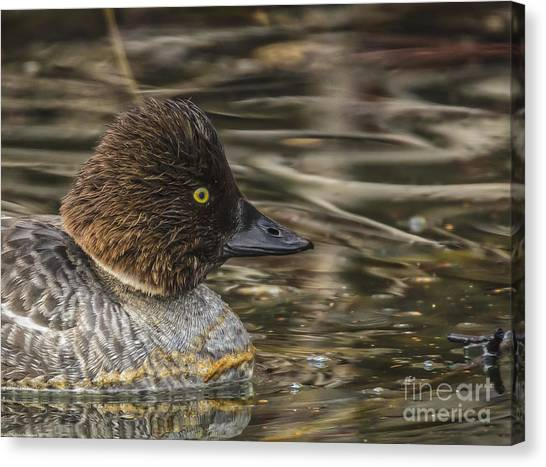 Goldeneye Canvas Print - Quack by Mitch Shindelbower
