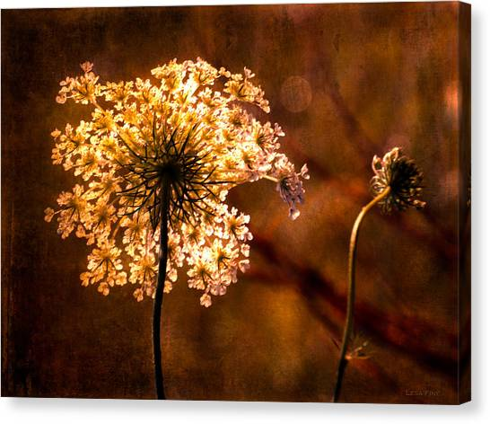 Queen Annes Lace Vintage Canvas Print