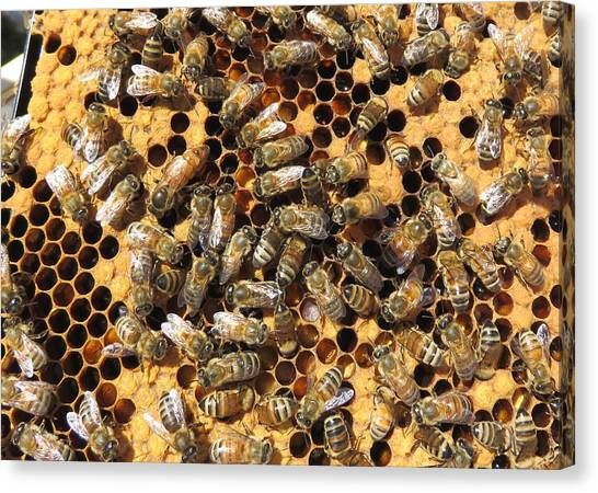 Queen Bee And Her Attendants Canvas Print