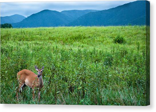 Queen Of The Cove Canvas Print by Ron Plasencia