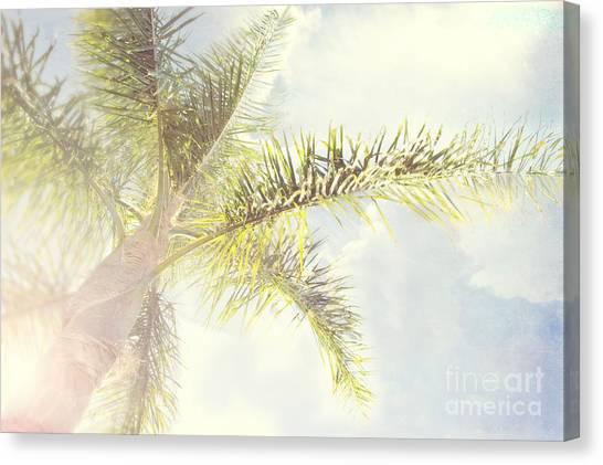 Queen Palm Canvas Print