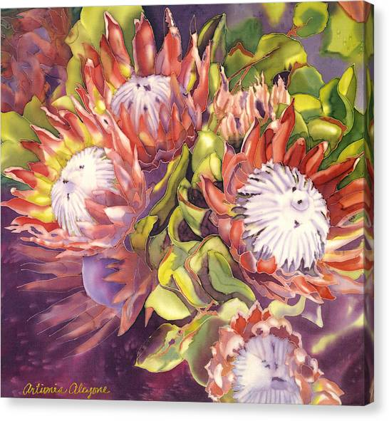 Queen Protea Canvas Print