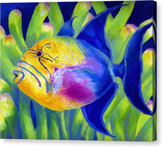 Queen Triggerfish Canvas Print