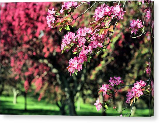 Queens Botanical Garden Canvas Print by JC Findley