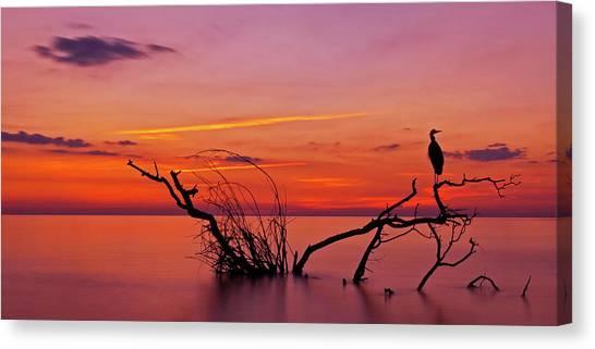 Storks Canvas Print - Quiet Evening by Verdon