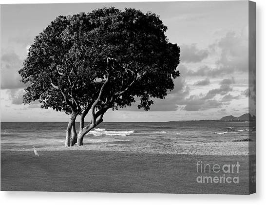 Quiet Kapaa Morning Canvas Print