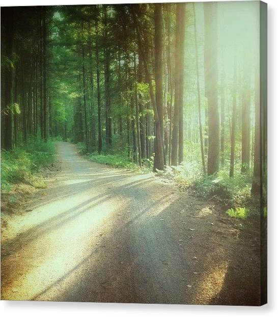 Forest Paths Canvas Print - Quiet by Nathalie Longpre