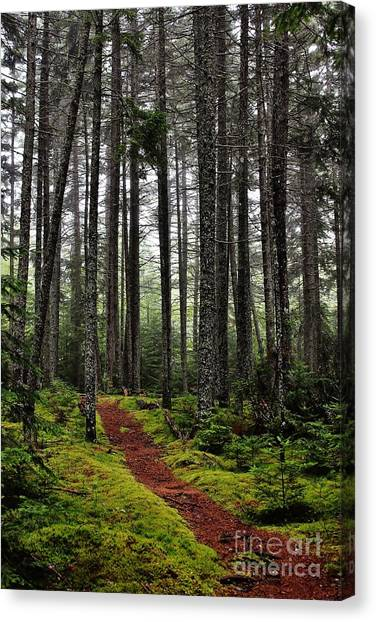 Quiet Woods Canvas Print