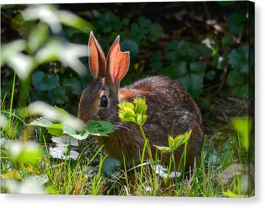Rabbit Ears Canvas Print