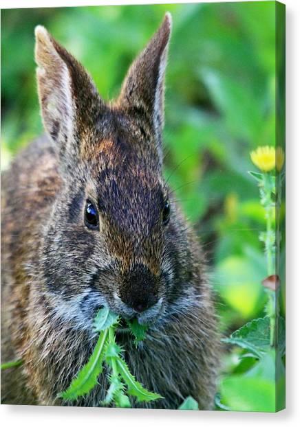 Rabbit Food Canvas Print