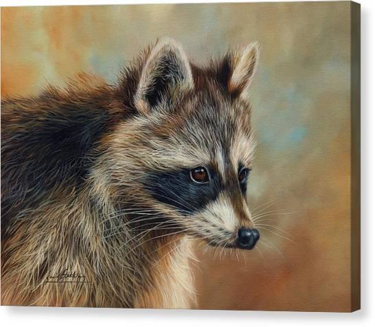 Raccoons Canvas Print - Raccoon by David Stribbling
