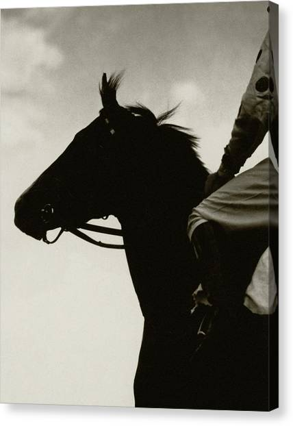 Race Horse Gallant Fox Canvas Print