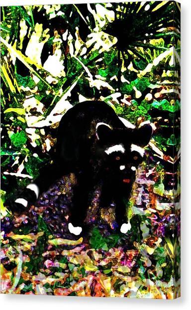 Racoon At Faver-dykes Park Canvas Print by Dane Ann Smith Johnsen