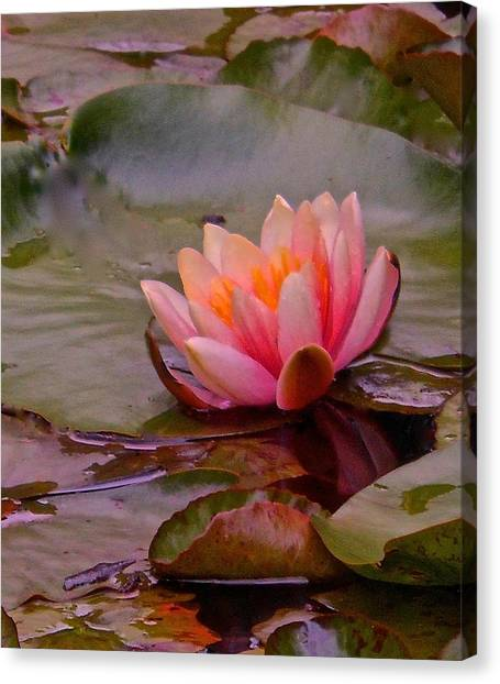 Radiant Lily Canvas Print