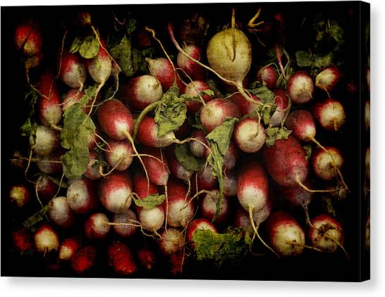Flemish Radish Art Canvas Print