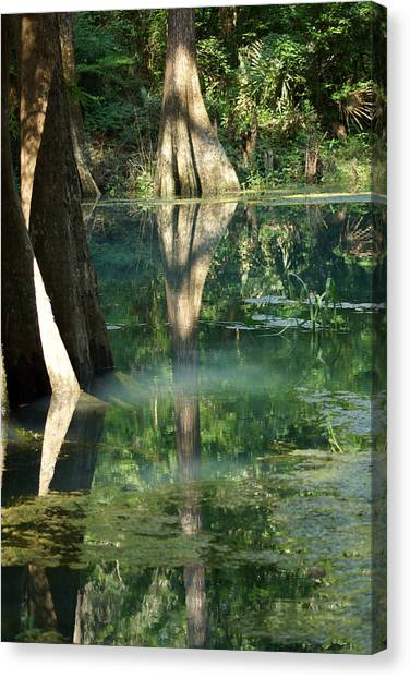 Radium Springs Creek In The Summertime Canvas Print