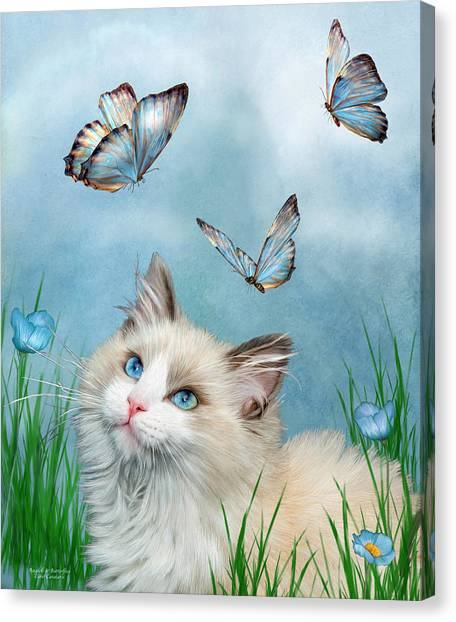 With Canvas Print - Ragdoll Kitty And Butterflies by Carol Cavalaris