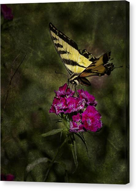 Canvas Print featuring the photograph Ragged Wings by Belinda Greb