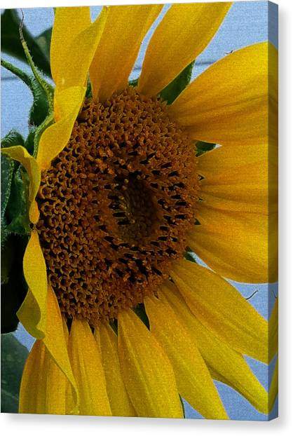Rahab's Sunflower Canvas Print