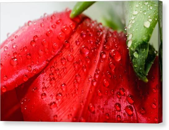 Rain Drops Canvas Print by Ivelin Donchev