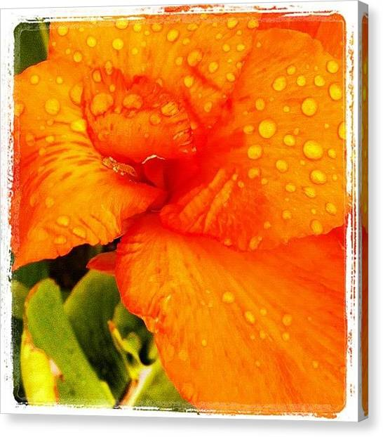 Venice Beach Canvas Print - Raindrops On Orange Flower by Melissa DuBow